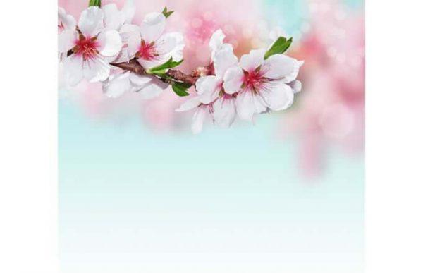 Фотообои Ветвь с цветами
