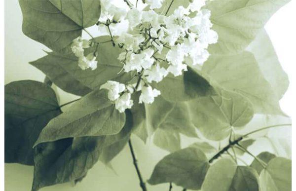 Фотообои Белые цветочки