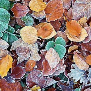 Фотообои Листья в инее