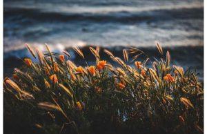 Фотообои Цветы на берегу