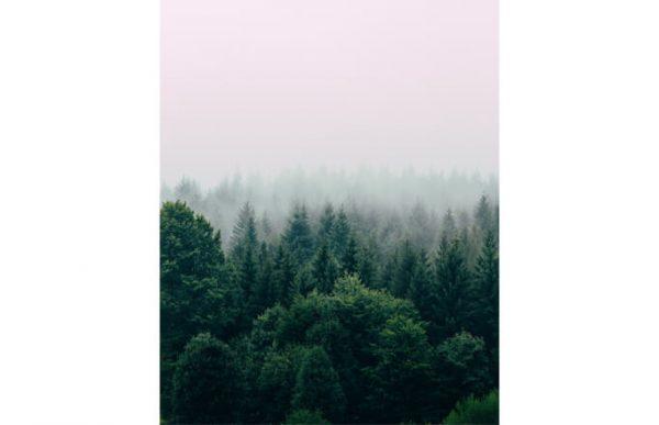 Фотообои Туманная даль