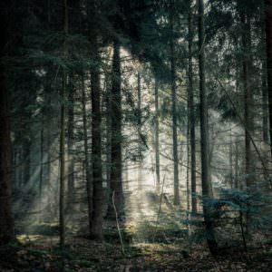 102010 Мрачный лес