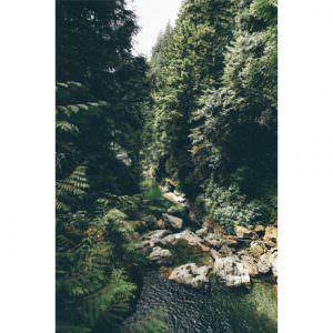 Фотообои Густой лес