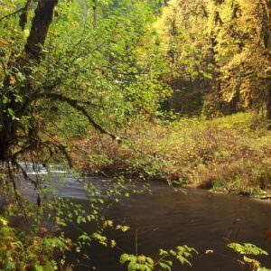 Фотообои Осенний водоём