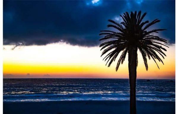 Фотообои Пальма на закате