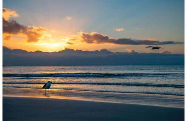 Фотообои Чайка на пляже