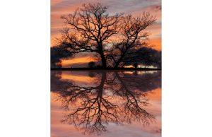 Фотообои Отражение дерева