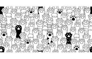 Фотообои Кошачьи лапки