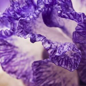 108013 Узоры цветка