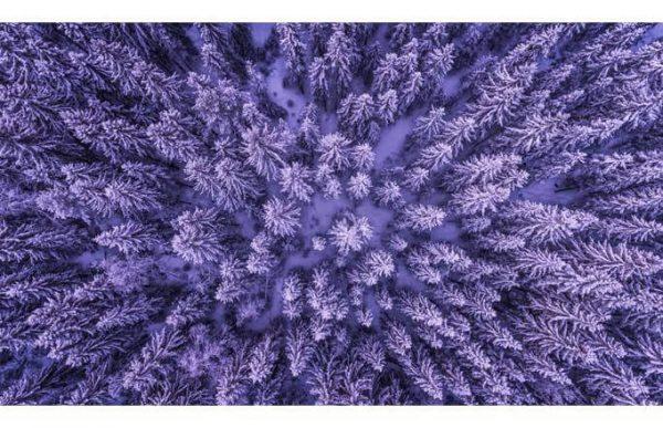 108014 Вид на лес
