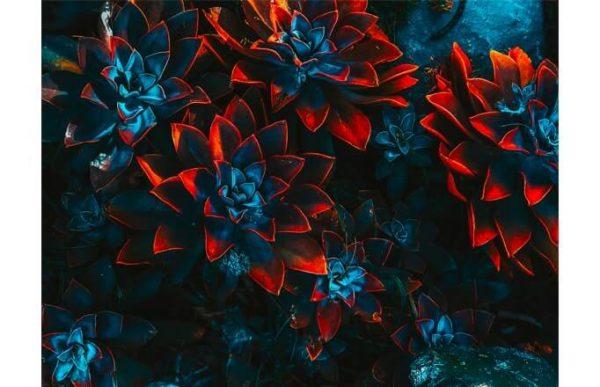 108017 Цветы арт