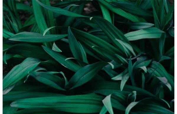 Фотообои Густая трава