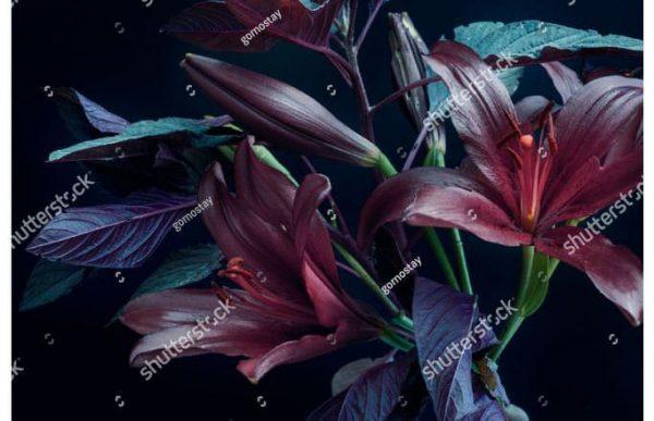 Фотообои Тёмные лотосы