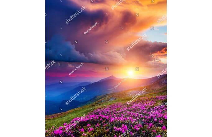 Заказать фотообои 101022 Цветы на горном лугу в интерьере ...