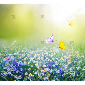 Фотообои Бабочки на лугу