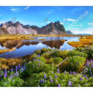 Фотообои Озеро на лугу
