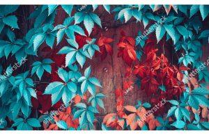 Фотообои Бирюзовая и красная листва