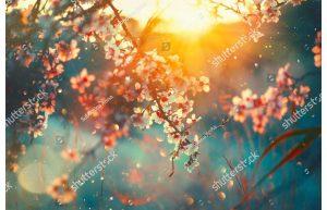 Фотообои Весеннее цветение
