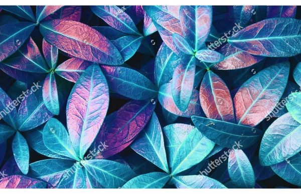 Фотообои Листья аплиумфиолетовые