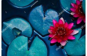 Фотообои Розовые кувшинки в воде