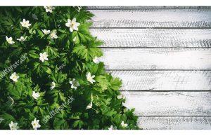 Фотообои Цветок ветриница