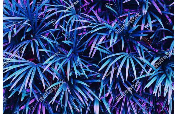 Фотообои Листья пальмы аплиумфиолетовые
