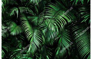 Фотообои Пальмовые заросли