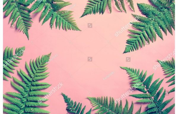 Фотообои Листья папоротника на розовом
