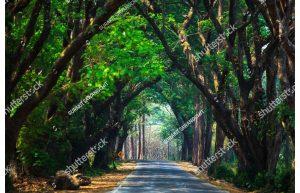 Фотообои Дорога через лес-2