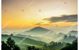 Фотообои Чайные плантации