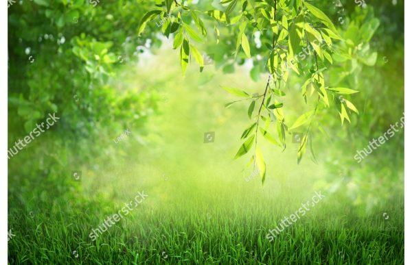 Фотообои Утренняя зелень