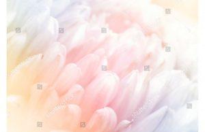 Фотообои Нежные воздушные лепестки