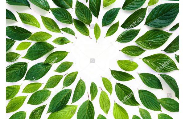 Фотообои Сердце из листьев