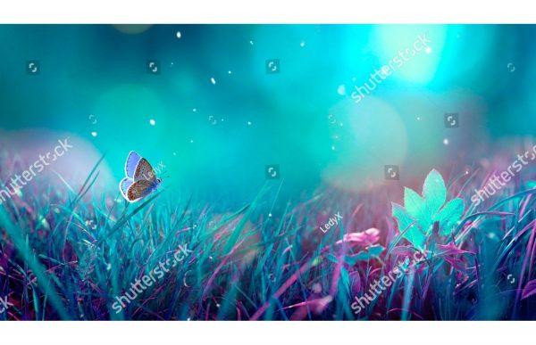 Фотообои Бабочка в боке