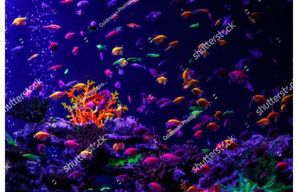 Фотообои Морское дно и его обитатели