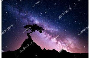 Фотообои Силуэт дерева на космическом фоне