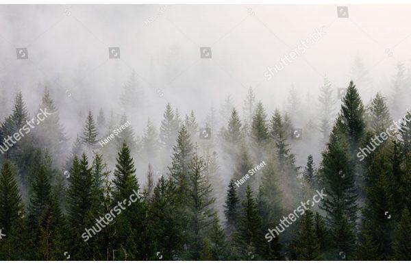 Фотообои Темно-зеленый лес