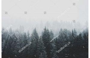 Фотообои Туманный зимний лес