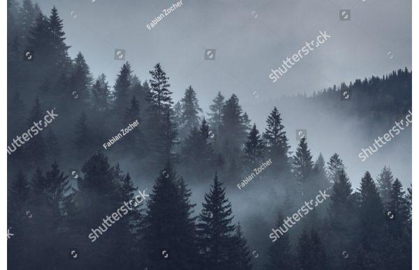 Фотообои Серо-синий лес