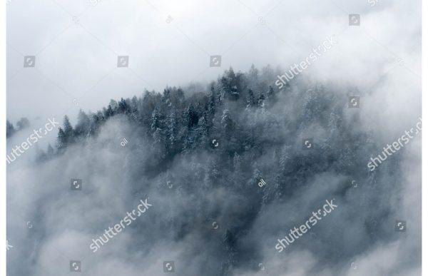 Фотообои Лес в облаках