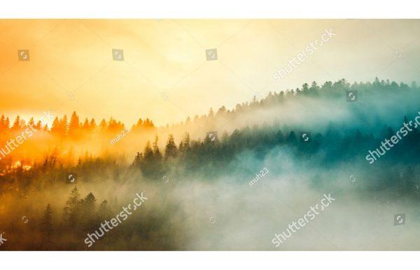 Фотообои Лес в радужном тумане