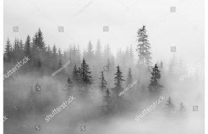 Фотообои Лес в светлом тумане