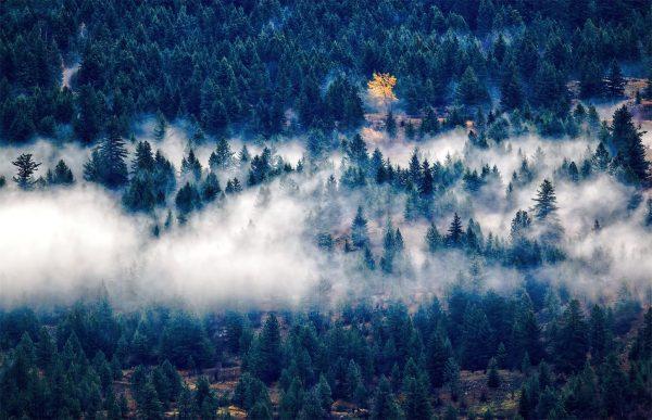 Фотообои Хвойный лес в тумане