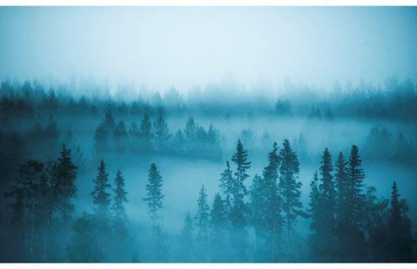 Фотообои Лес в голубом тумане