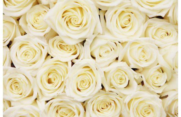 Фотообои Желтые розы