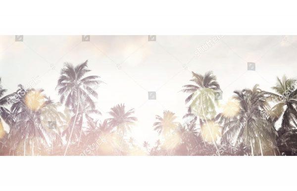 Фотообои Пальмы в солнечных бликах