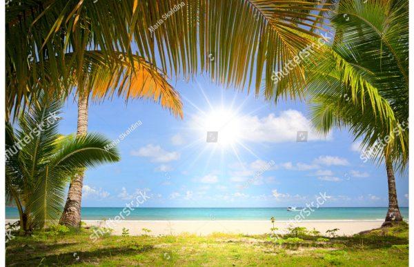 Фотообои Солнце море и пальмы