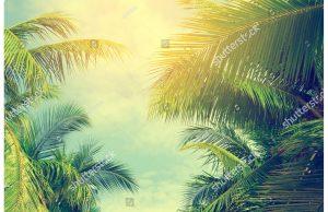 Фотообои Солнце сквозь пальмовые листья