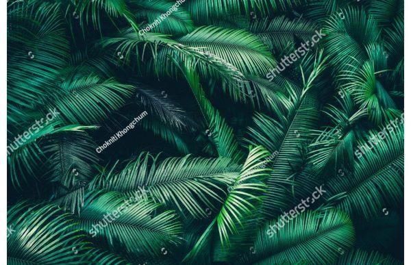 Фотообои Пальмовая гуща