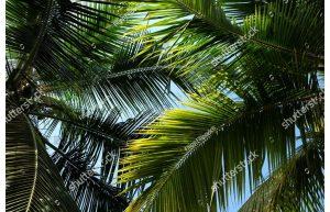 Фотообои Небо сквозь пальмы